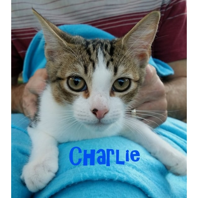 Photo of Charlie & Mumma Petal