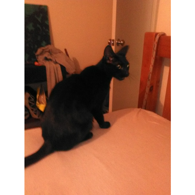 Photo of Panther Ac0128