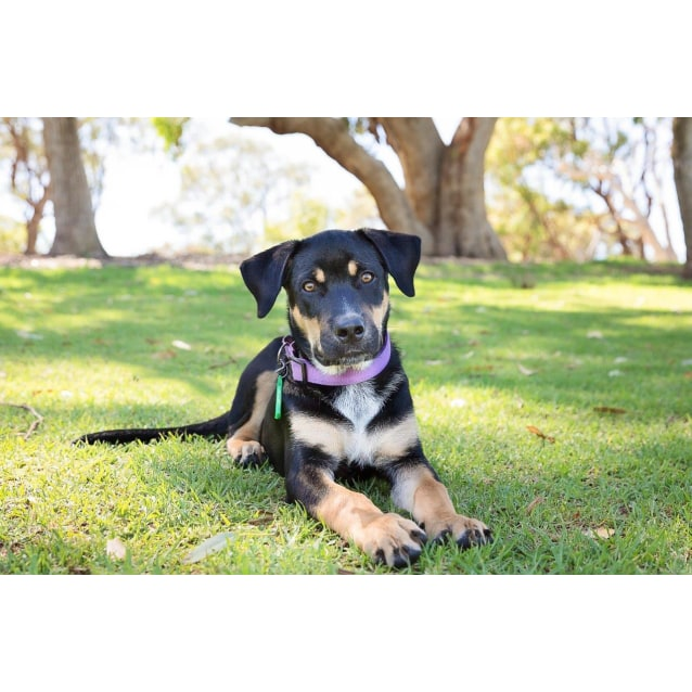 Photo of Stryker *On Trial With My New Family*