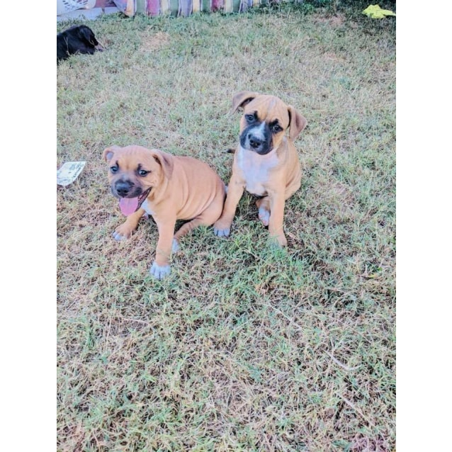 Photo of Lincoln  **Adoption Pending**