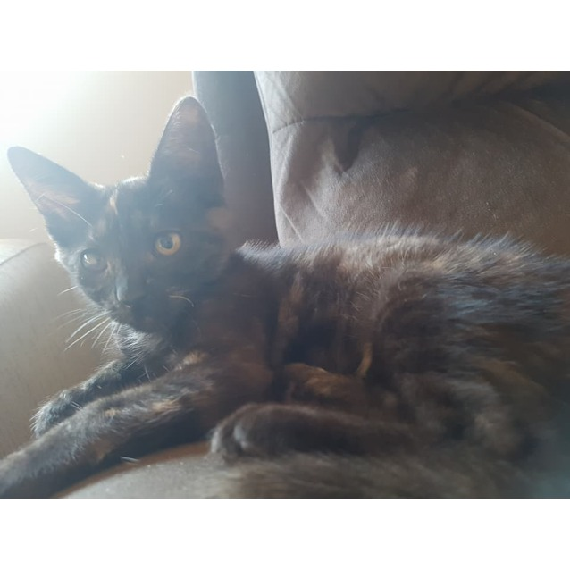 Photo of Cath ** 2nd Chance Cat Rescue**