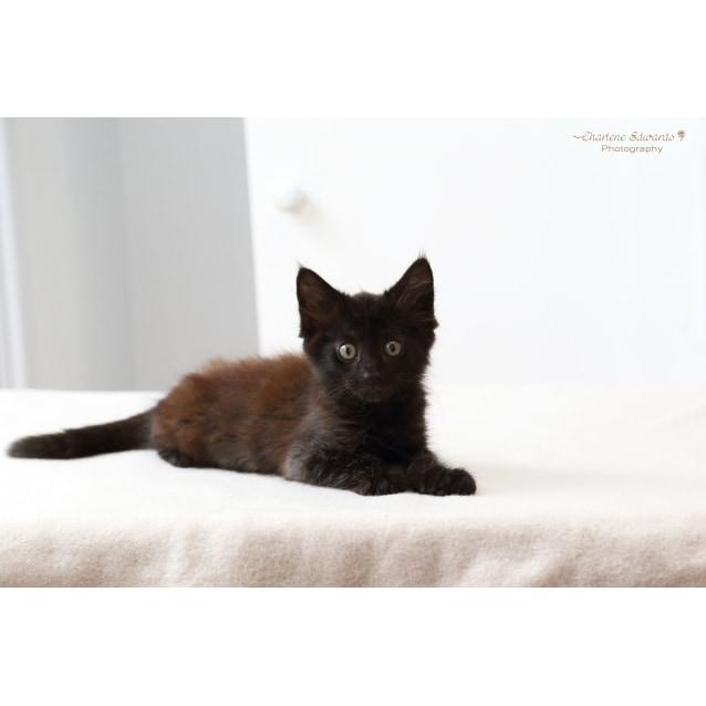 Photo of Kato