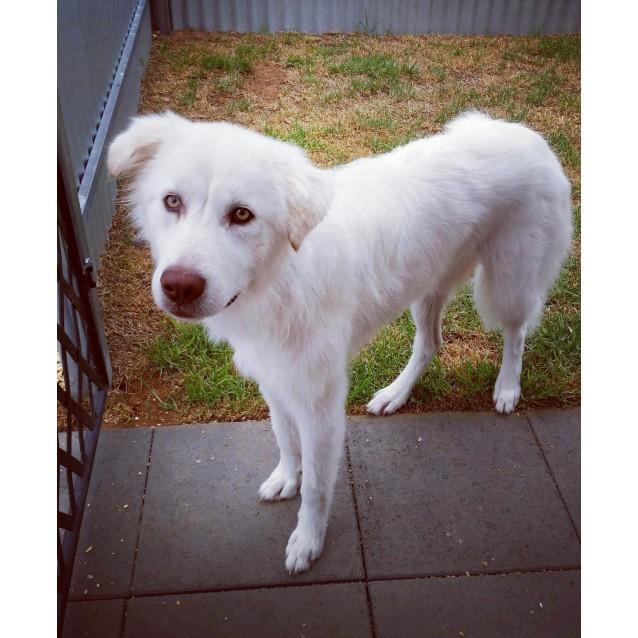 Photo of Blondie **Adopted**