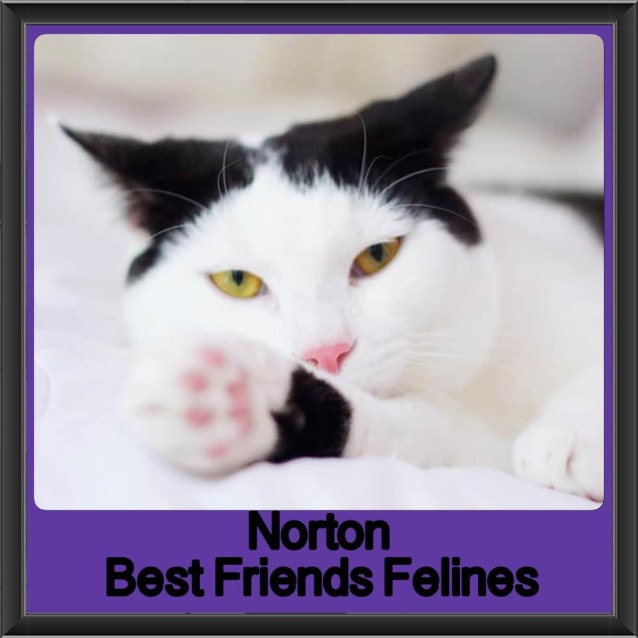 Photo of Norton