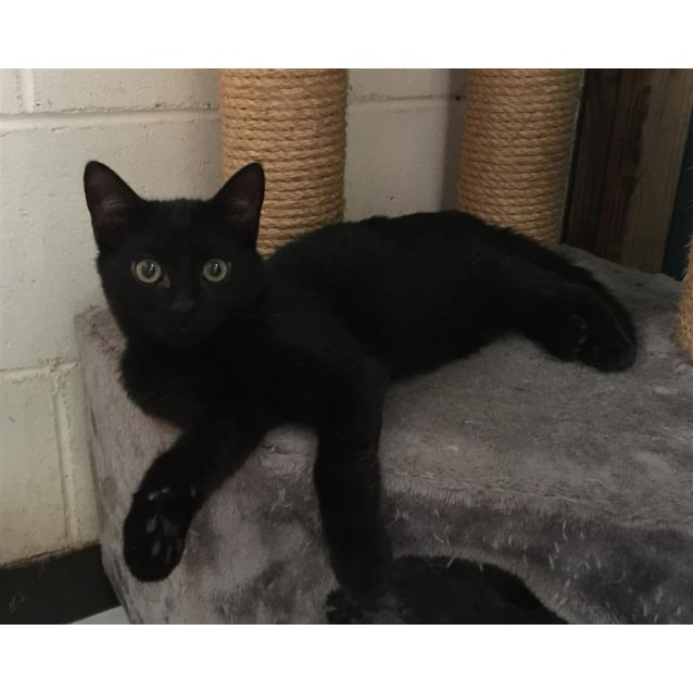 Photo of Saffy