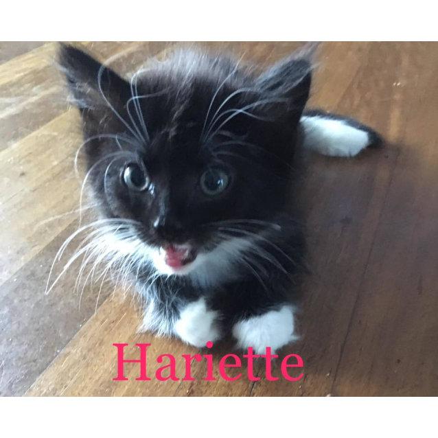 Photo of Hariette