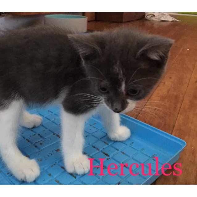 Photo of Hercules