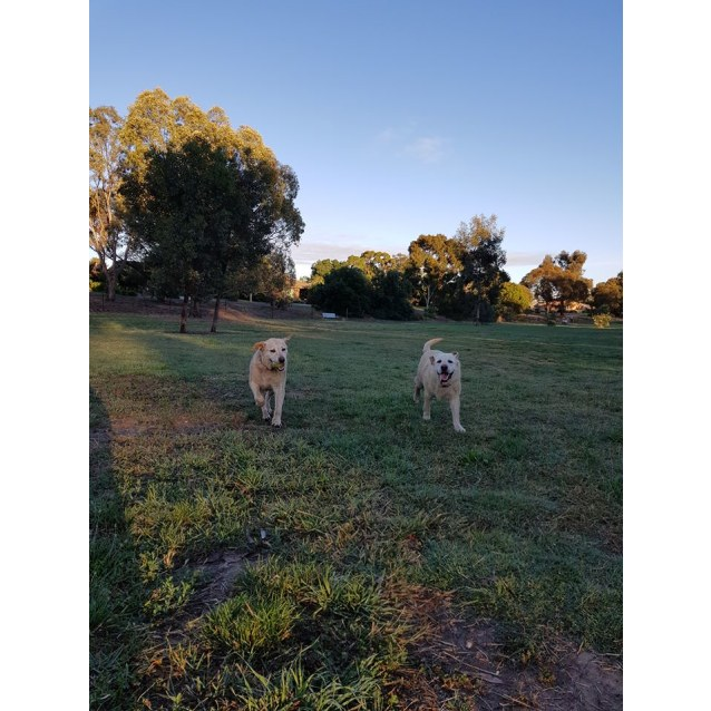 Photo of Boof And Bronte