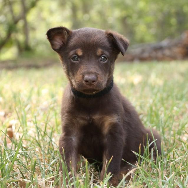 Adopt A Dog Newcastle