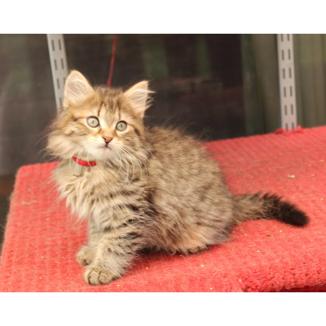 Photo of Dereak **2nd Chance Cat Rescue**