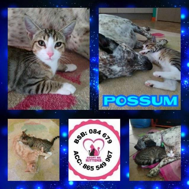 Photo of Possum