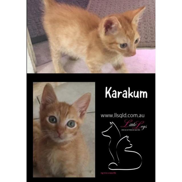 Photo of Karakum