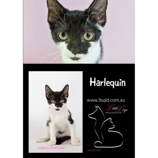 Photo of Harlequin