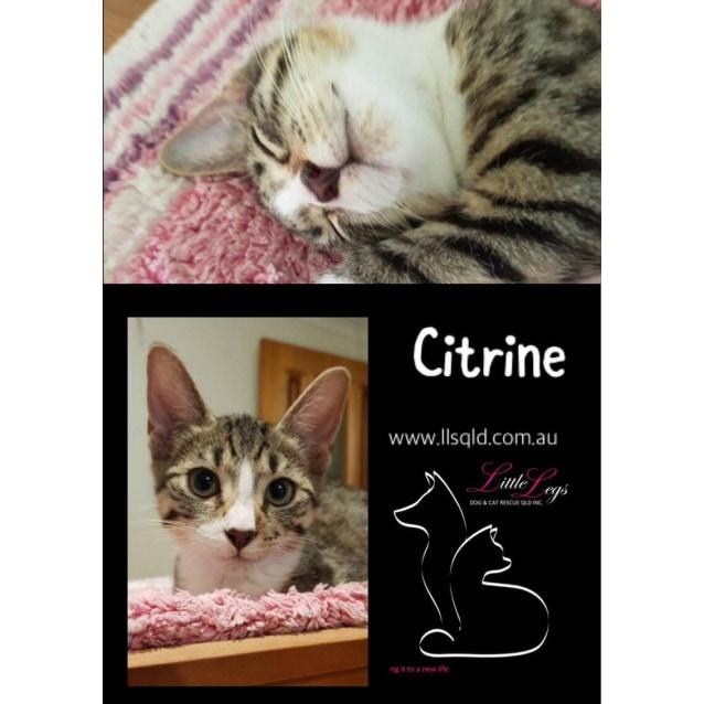 Photo of Citrine
