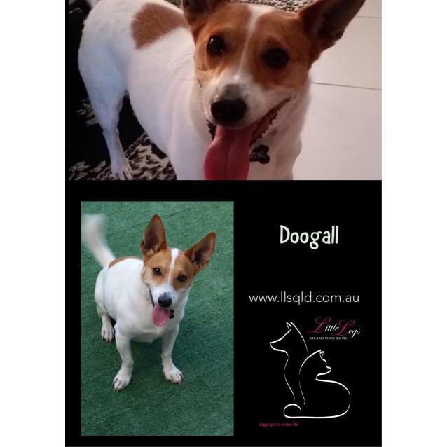 Photo of Doogal