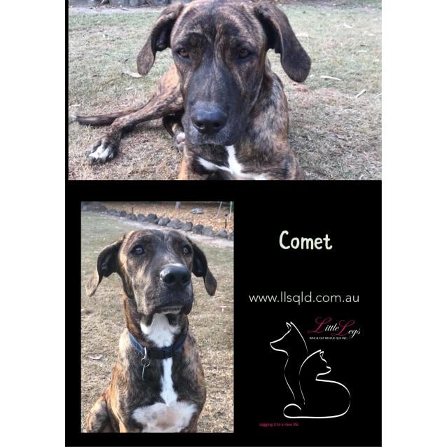Photo of Comet