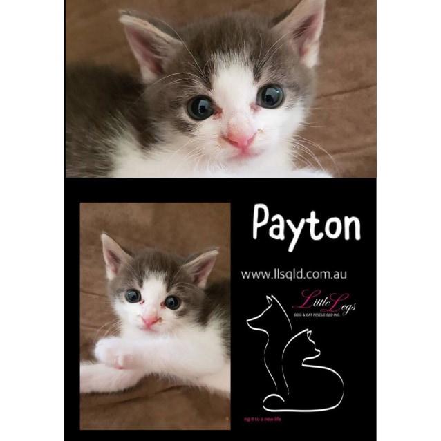 Photo of Payton