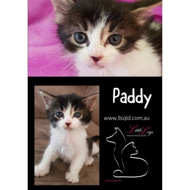 Photo of Paddy