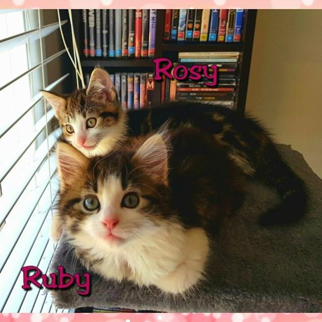 Photo of Rosy