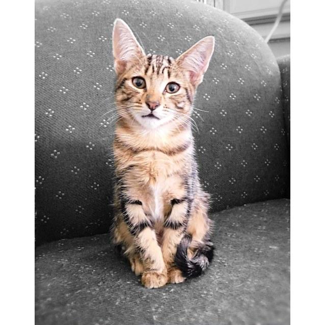 Photo of Kimba