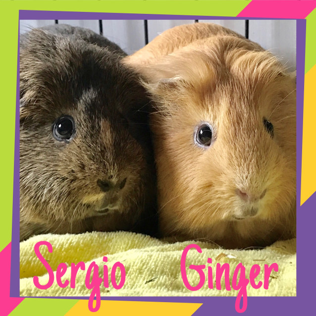 Photo of Sergio And Ginger