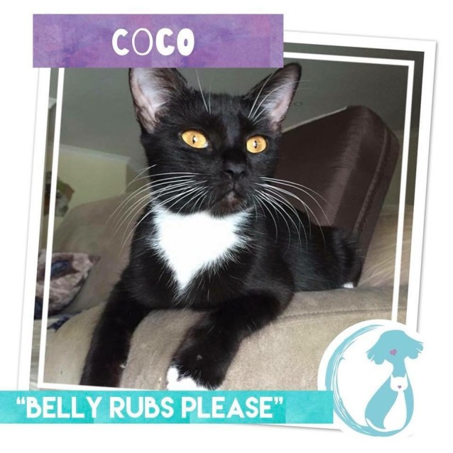 Photo of Coco *Limited Time Valentines $50 Adoption Fee*
