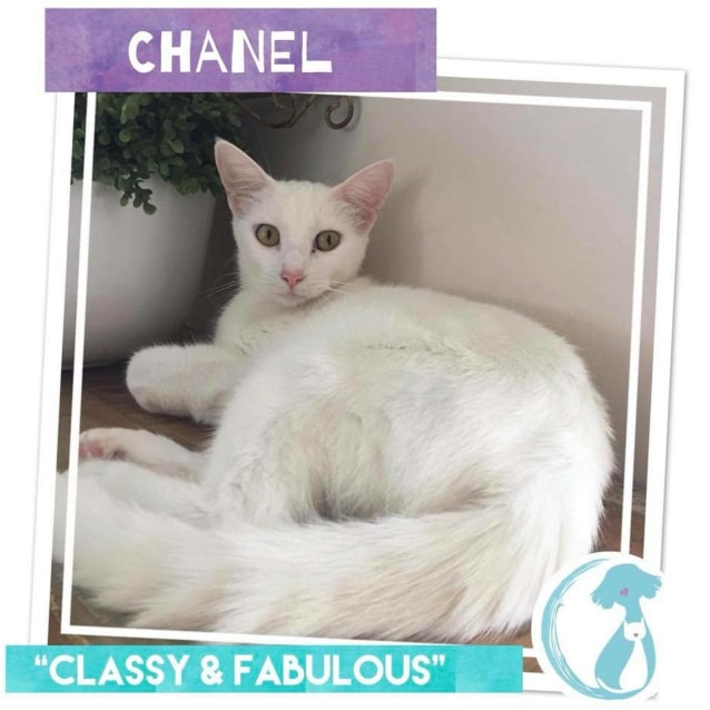 Photo of Chanel