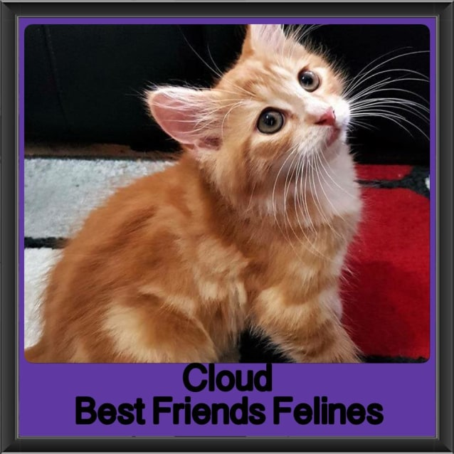 Photo of Cloud