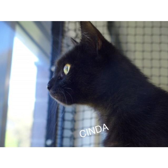 Photo of Cinda