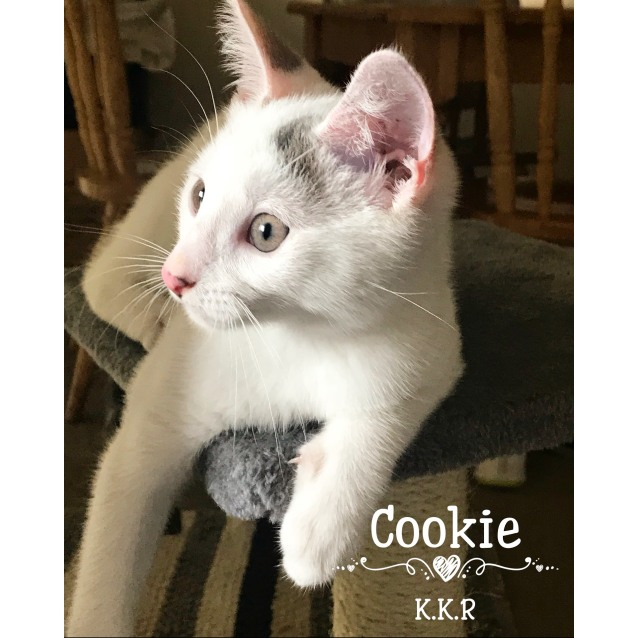 Photo of Cookie