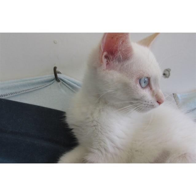 Photo of Bobo
