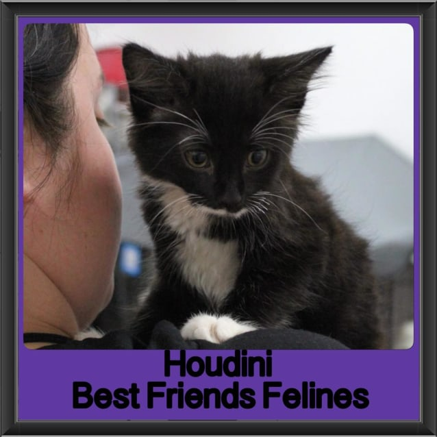 Photo of Houdini