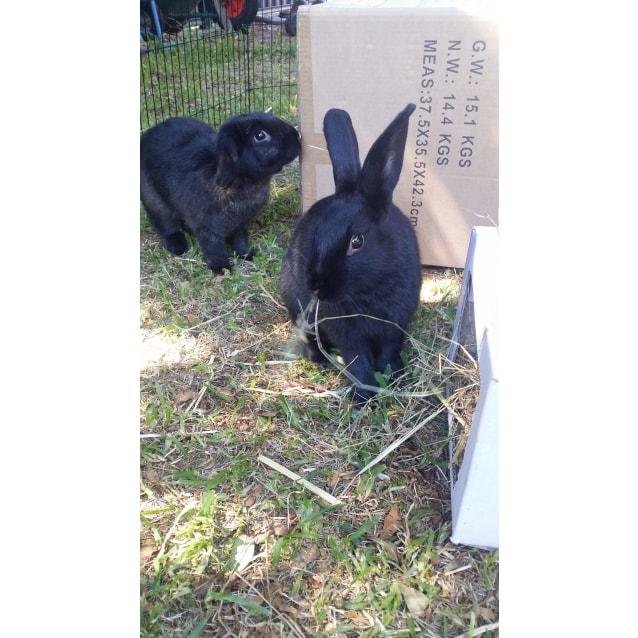 Photo of Spotu & Milo