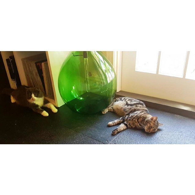 Photo of Muffin (Located In Yarraville)
