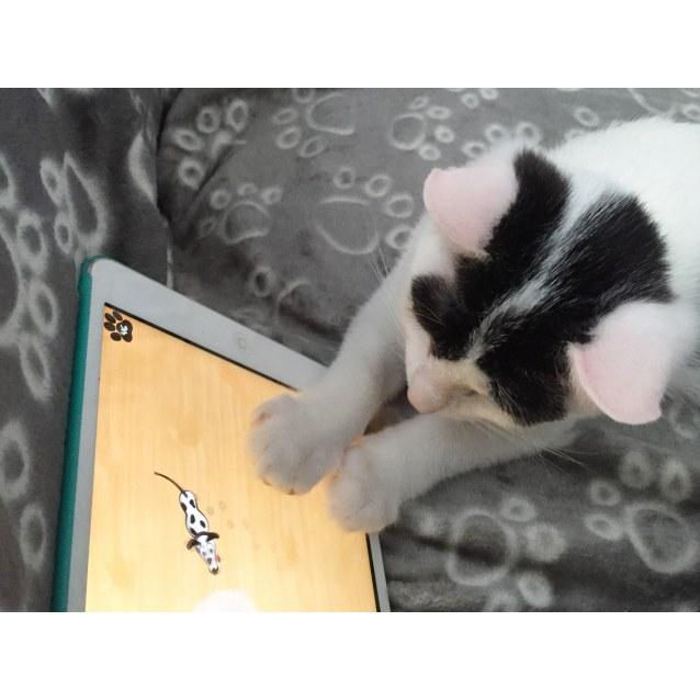 Photo of Ace ~ Kitten