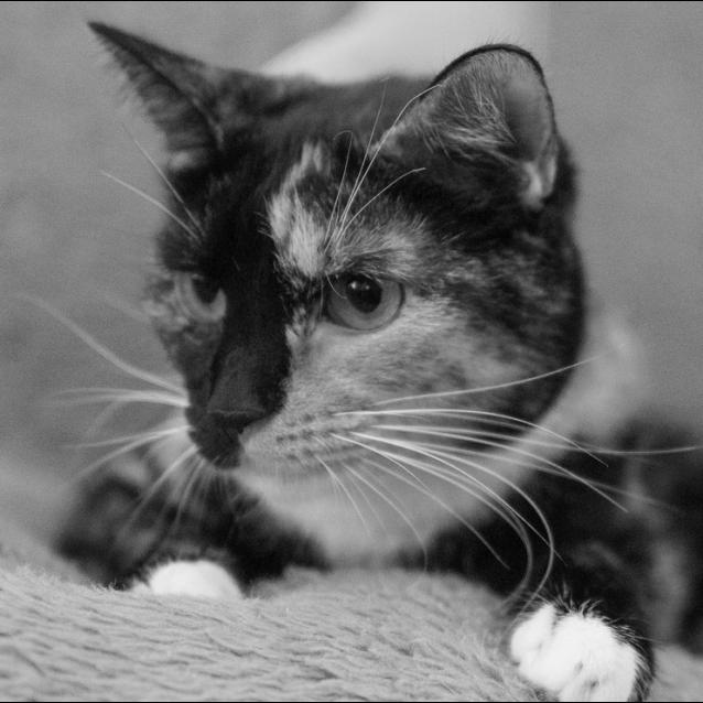 Photo of Rosie Nc0406