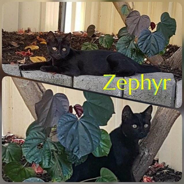 Photo of Zephyr
