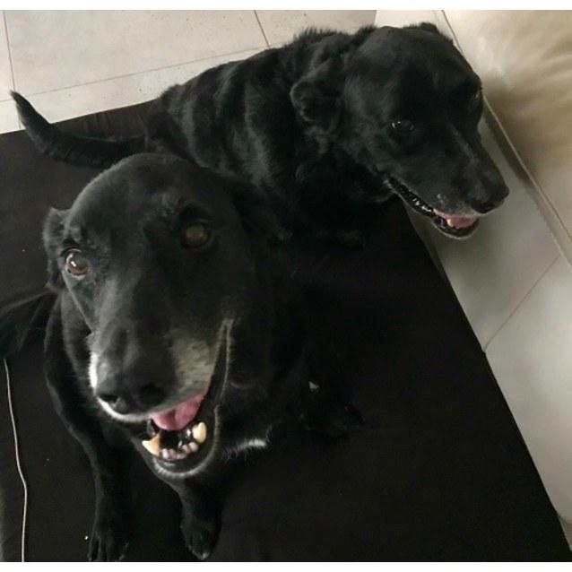 Photo of Izzy & Max