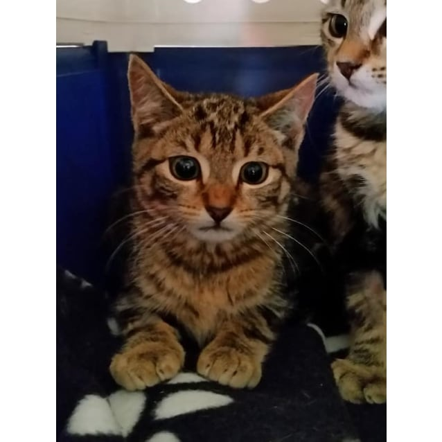 Photo of David **2nd Chance Cat Rescue**