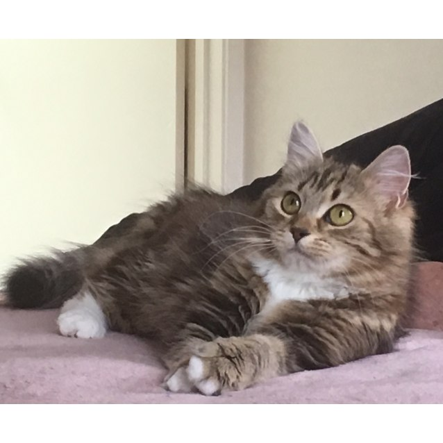 Photo of Jasmine (Located In Carlton North)