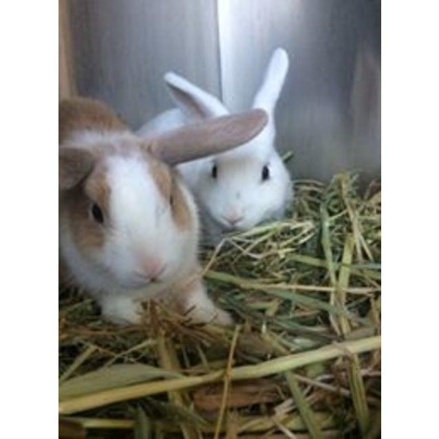 Photo of Cubone And Casper