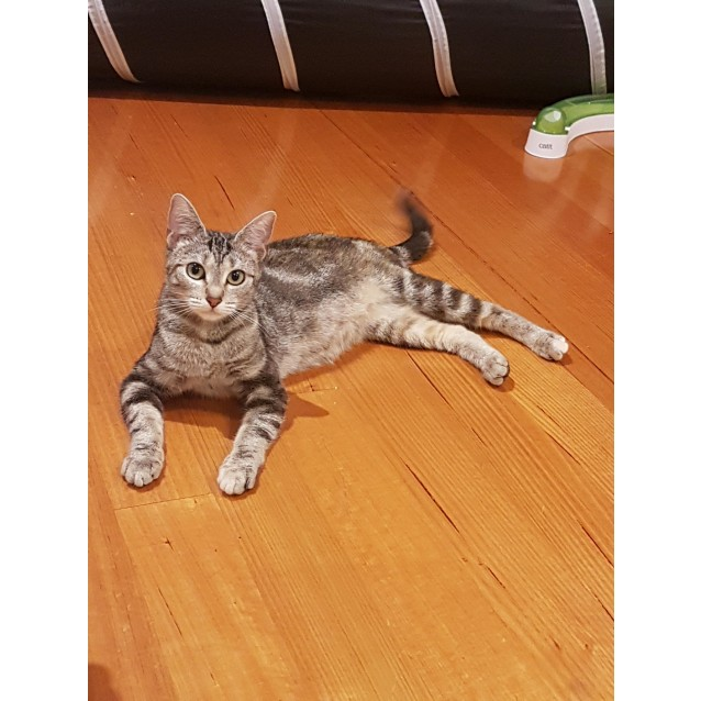 Photo of Tibbles