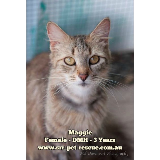 Photo of Maggie
