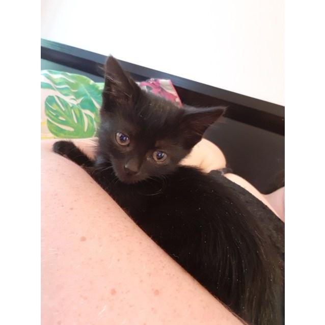 Photo of Salem Dragonheart