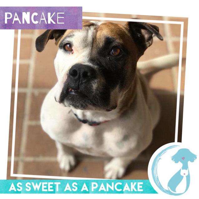 Photo of Pancake