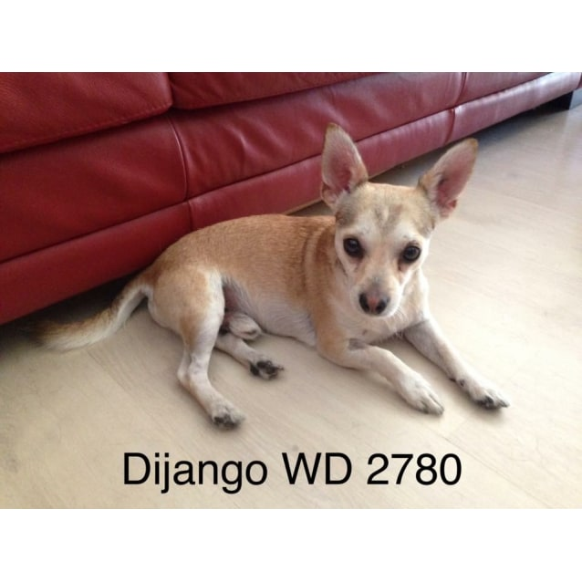Photo of Django With Margaret