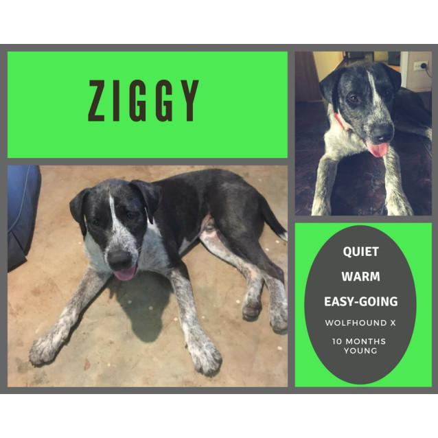 Photo of Ziggy