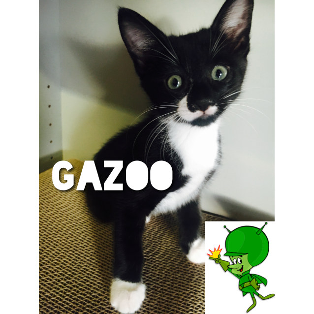 Photo of Gazoo
