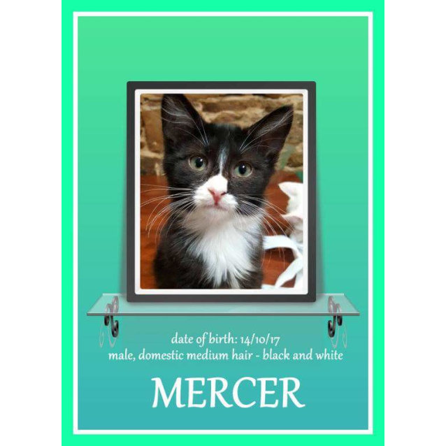 Photo of Mercer