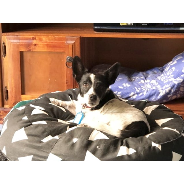 Photo of Huxley